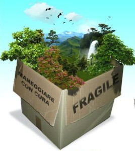 fragile-thumb-406x455-39961